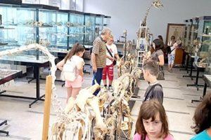 Moștenirea Culturală în ţara-mamă – Tabăra De Vară De La Cluj-Napoca